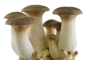 Join us for an awesome Mushroom Cultivation Workshop at the